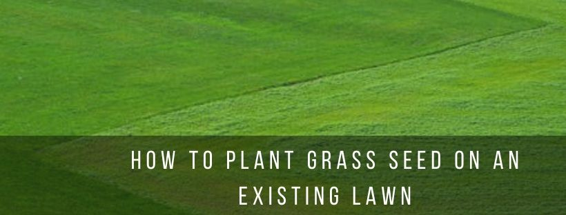Tips to Plant grass to an existing lawn