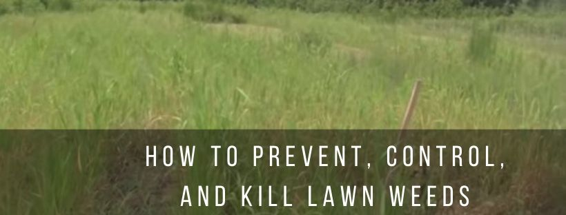Tips to prevent and kill lawn weeds