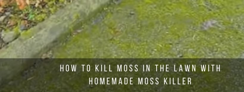 Tips to kill moss with homemade moss killer